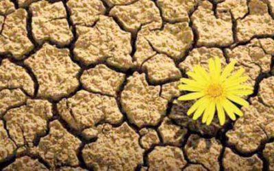 Allenarsi per evolvere in tempo di crisi